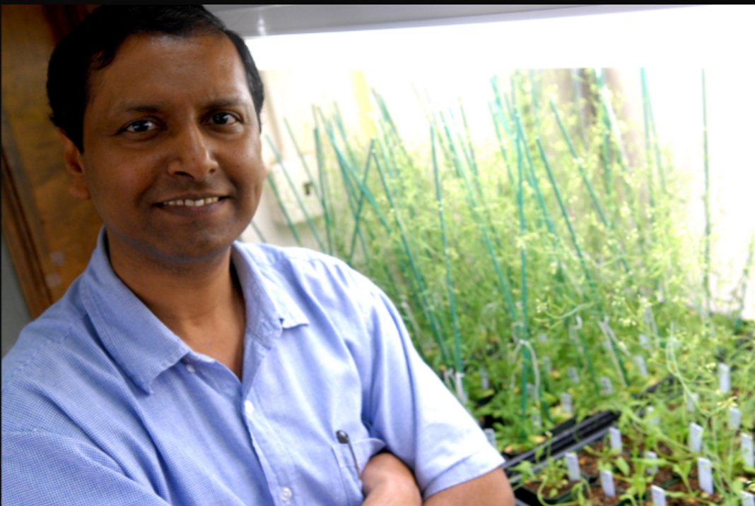 Congrats Prof Enamul Huq and Team for finding the spatial regulators involved in thermomorphogenesis of plants